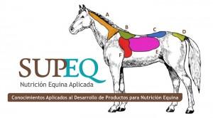 condicion-corporal-equinos-SUPEQ